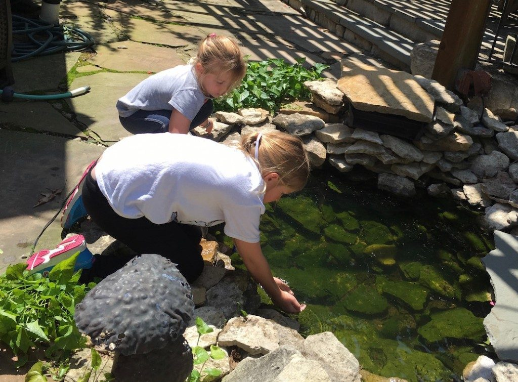 Hunting for tadpoles