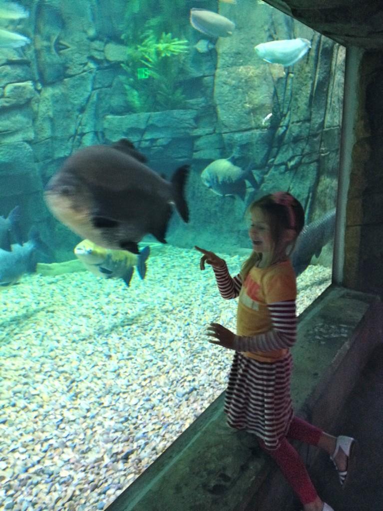 Salt Lake City, Utah, aquarium, The Living Planet ...